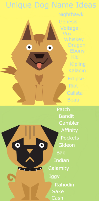 Unique Dog Name Ideas