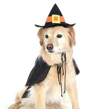 Halloween Costume Ideas For Big Dogs -