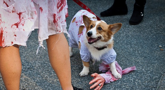 2015 Halloween Costume Contest - Costume Works Gallery ... |Diy Zombie Dog Costumes