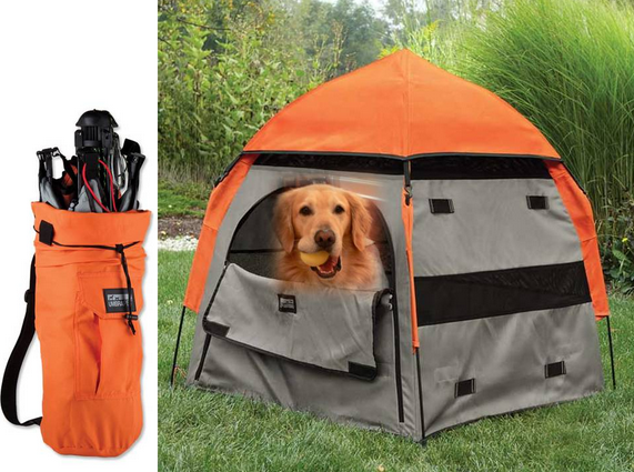 4 Tips For Camping With Your Dog