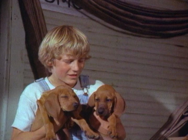 a boy and two puppies