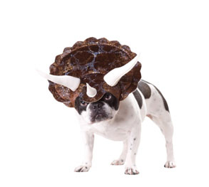 Dog Dressed Like Dinosaur