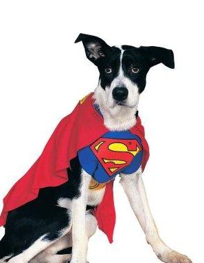 Dog Dressed Like Superman