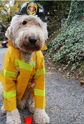 Dog Dressed Like Fireman