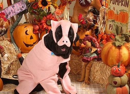 Pigdog Costume